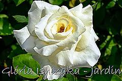 27   - Glória Ishizaka - Rosas do Jardim Botânico Nagai - Osaka