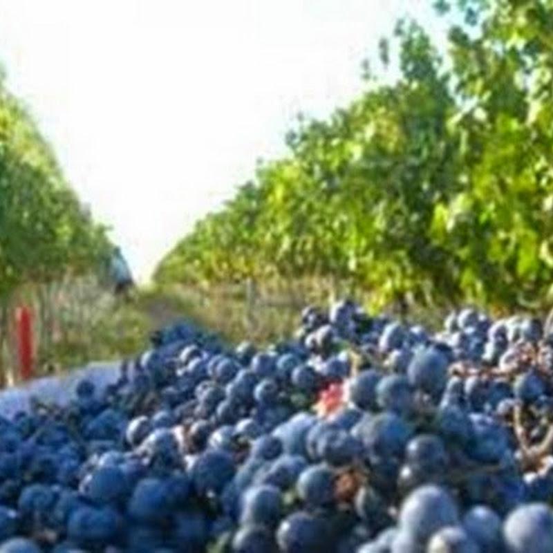 La Ruta del Vino en Rio Negro.