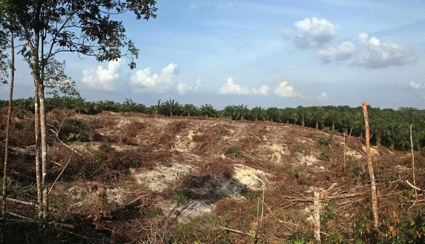 Cleared land designated for a palm oil plantation in Pelalawan, Indonesia in 2010. A big topic in 2013 is sourcing sustainable palm oil, as much of the tropical deforestation that contributes to climate change is driven by palm oil production, according to Kron. Photo: Dimas Ardian / Bloomberg