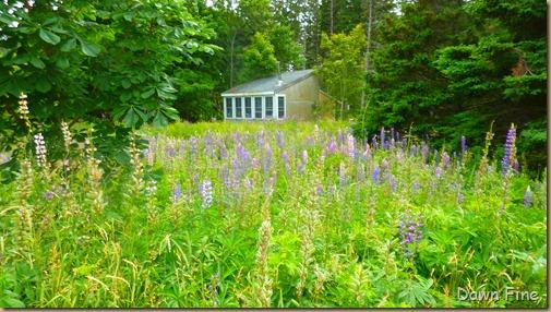 Acadia National Park_156