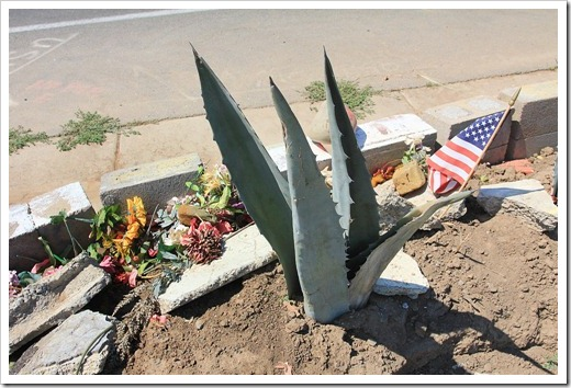 120715_apocalyptic_agave6