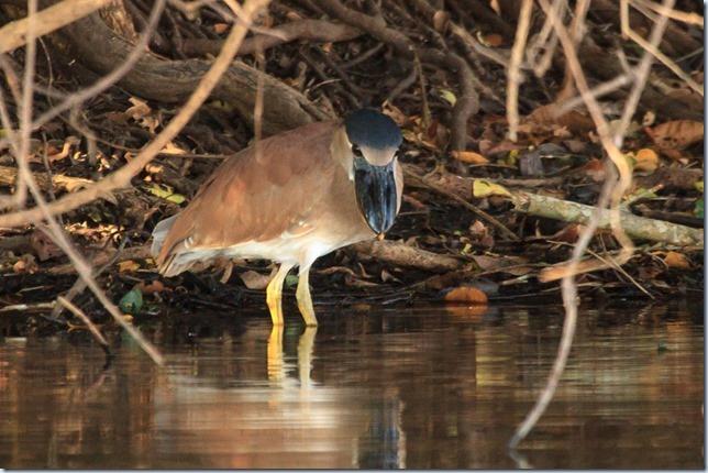 Pantanal_Herons-3