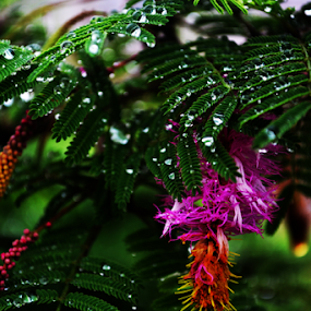 after rain water drops ...beauty by Sushant Ojha - Nature Up Close Gardens & Produce ( drops )