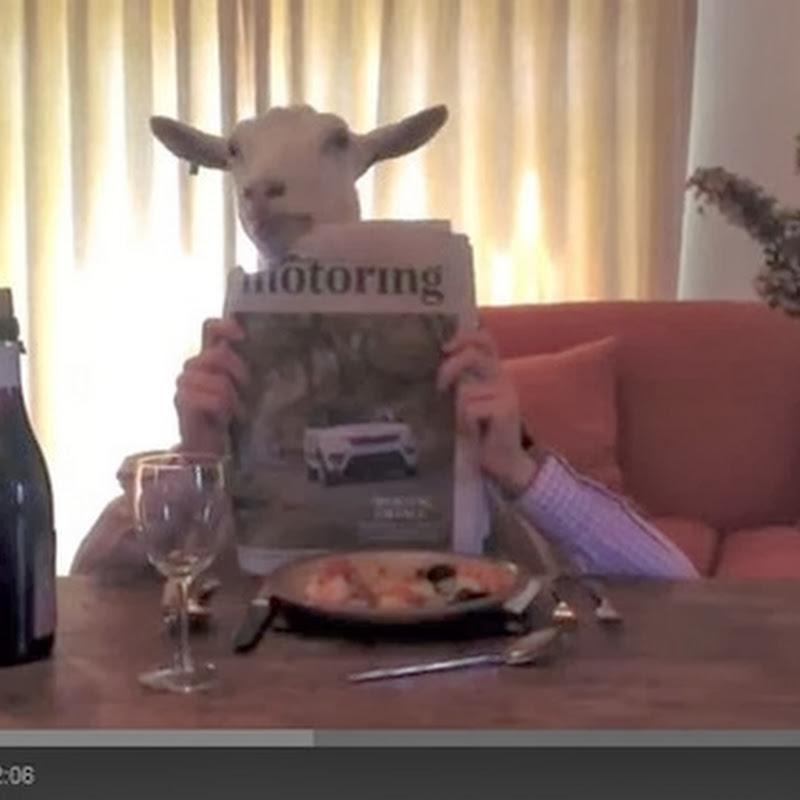 Κατσίκι τρώει ένα αριστοκρατικό δείπνο