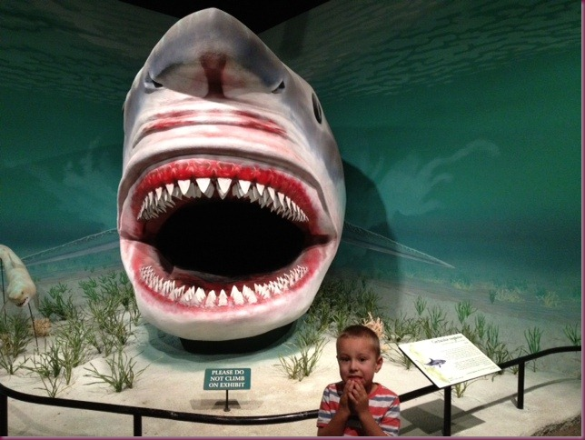 Connor and shark at the Dinasaur Museum