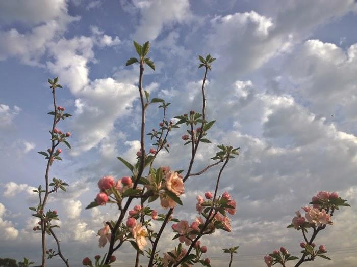my garden oct 2014 (25)