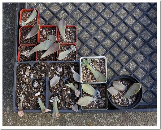 120202_leaf-cuttings1
