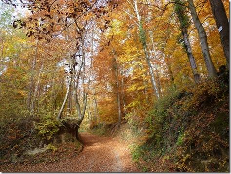 Even when lost in the hills behind Weingarten (Baden) natures pallette delights the solitary gardener.