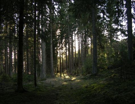 4 skog