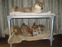 Bunk beds are a great way to maximize space in kennels and keep everyone clean.