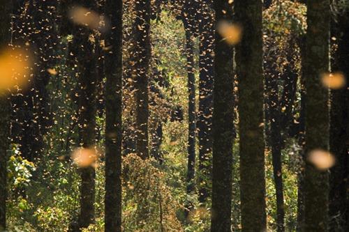 monarch-swarm