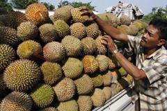 Durian Pasuruan
