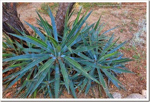 131203_TucsonBotanicalGarden_152