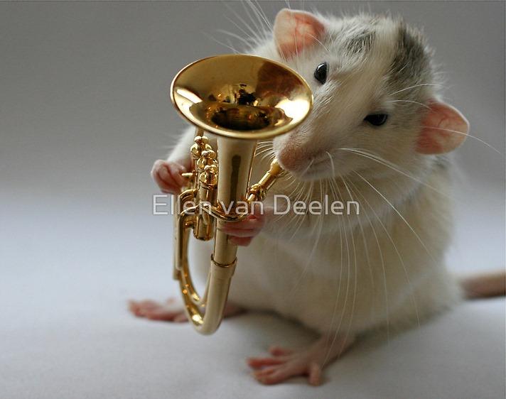 rat-musicians-011