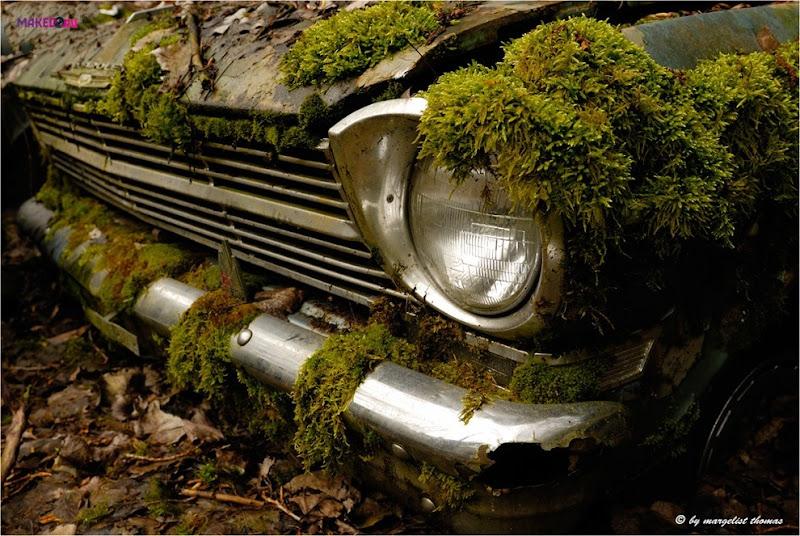 cars_013.jpg