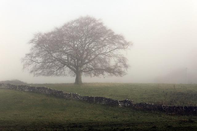 isaac';s tree