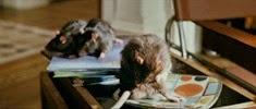 28 les rats