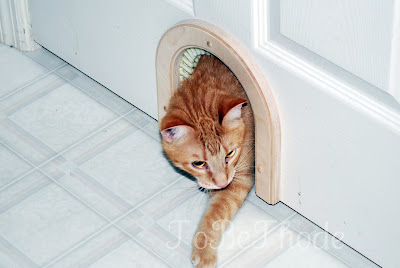 Cathole Cat Door