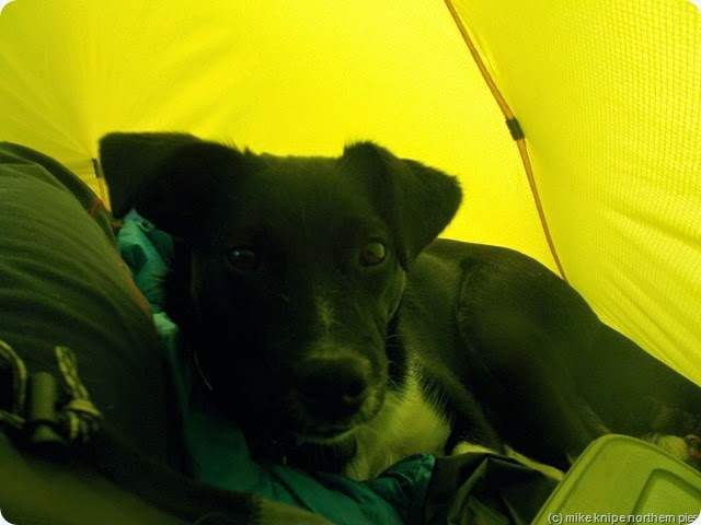 lucky likes the tent