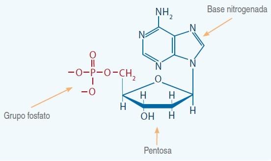 pentosa 2