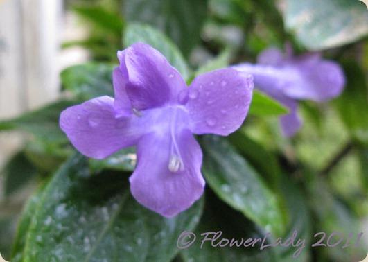 009-02-phil-violet
