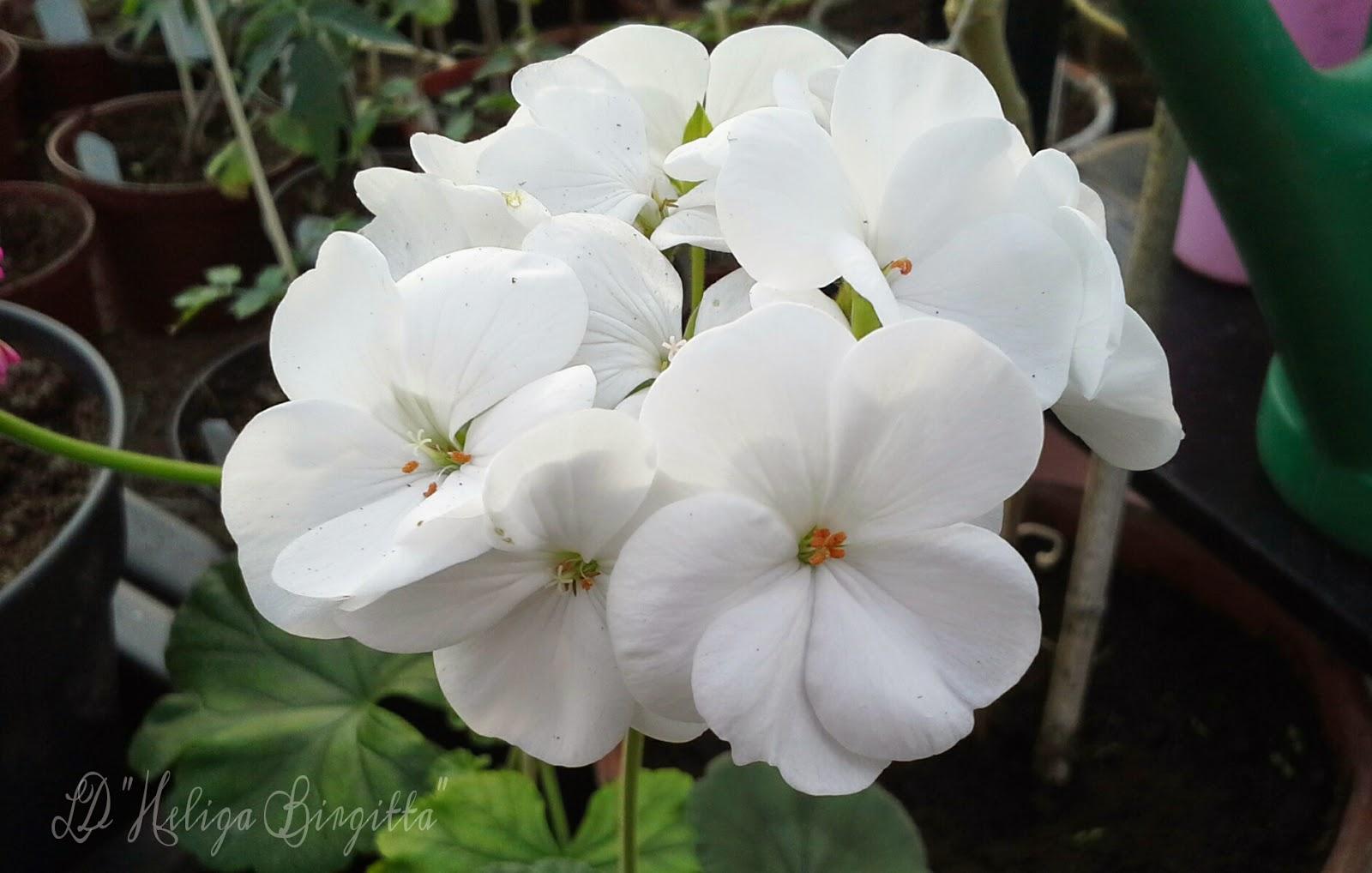 blommor höst rabatt