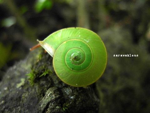green_snail_limestone_macro_samsung_ex1