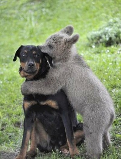 medo-the-bear-cub-hugs-dog