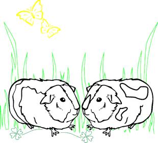 Ausmalbild meerschweinchen http xinni de