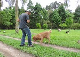 Cães em foco 1 (203)