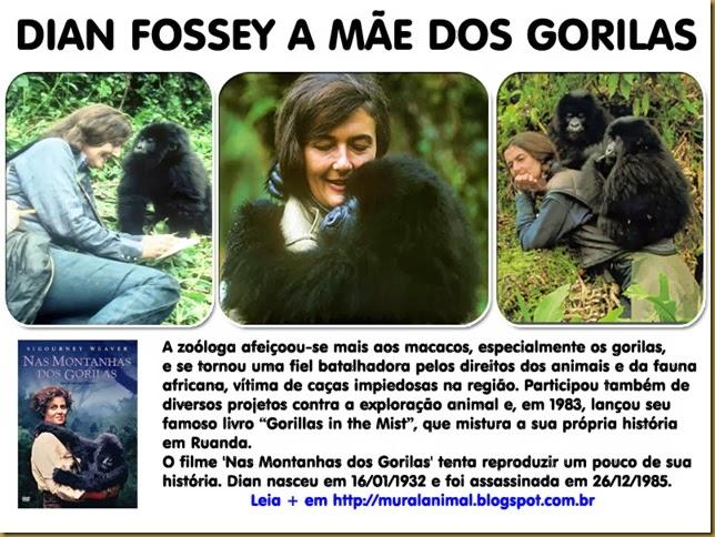 dian_fossey_mae-gorilas