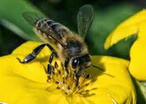 Amazing Pictures of Animals, Photo, Nature, Incredibel, Funny, Zoo, Bee, Insetcs, Anthophila, Alex (10)