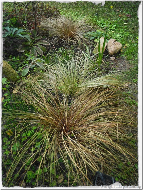 ornamental grasses, foliage