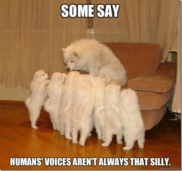 storytelling-dog-meme-8