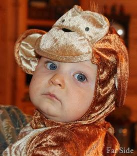 Teddy is a Monkey