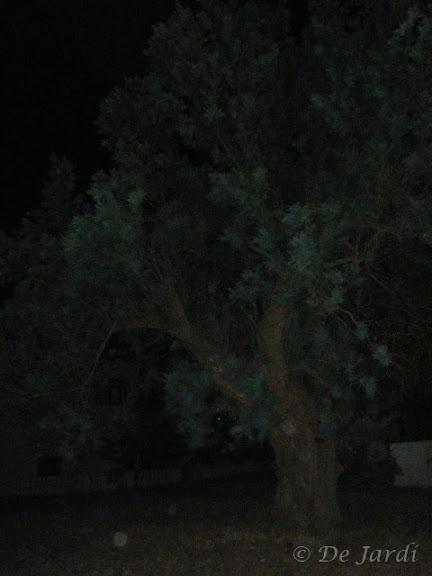 2012_06240014.jpg