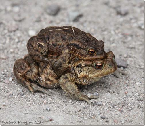 108 toads