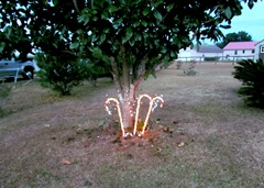 Our Lites Under The Magnolia