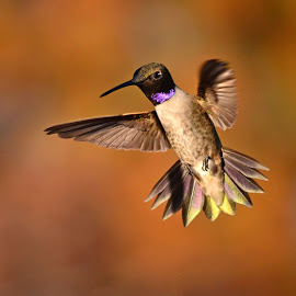 by Michelle Hunt - Animals Birds ( birds )