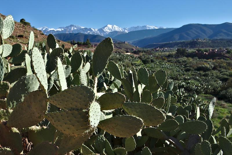 Cactusul si gardurile vii.