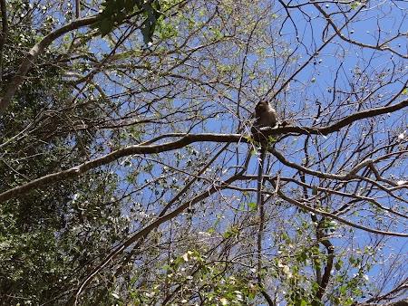 Maimuta in copac