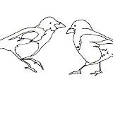 pair-of-magpies-scan.jpg