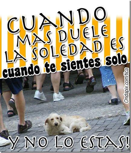 soledad (14)