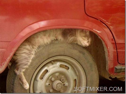 slp_cats_13