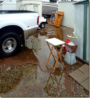 2011-12-13 - AZ, Yuma - Cactus Gardens - Record Rainfall (2)
