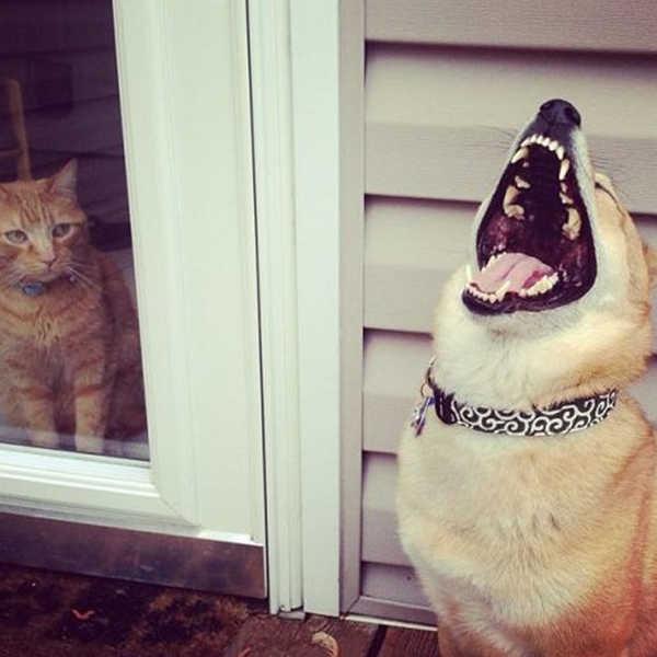 Animais tambem sabem rir 17