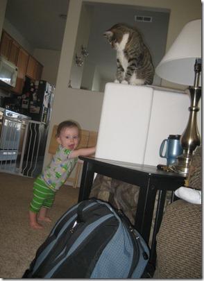 07 24 11 - Here kitty kitty (1)