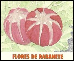 Flor de rabanete