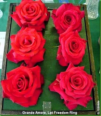Rosa Grande Amore