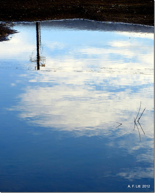 Puddle Sky.  Portland, Oregon.  April 2, 2012.  Photo of the Day by A. F. Litt: June 18, 2012.